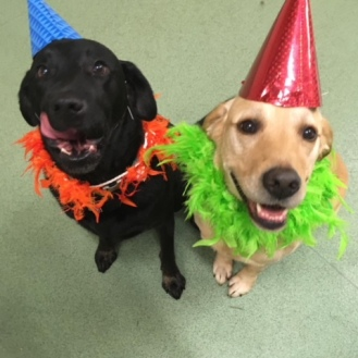 Nelson (left) and Fergus (right) in party mode.